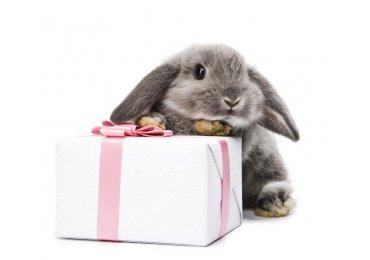 Timpul perfect pentru cadouri este acum! Ce daruim de Paste?